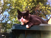 A picture of a cat on a wheelie bin