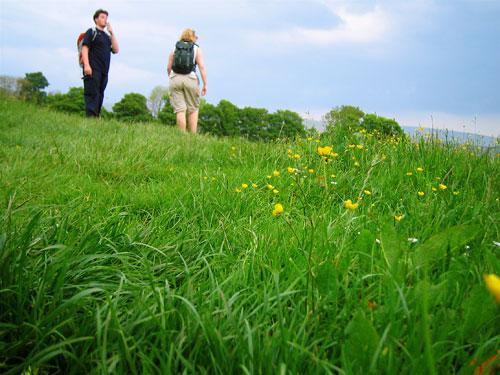 My walking companions crossing a field