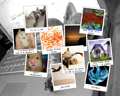 A snapshot scrapbook of fish, cats and hamsters