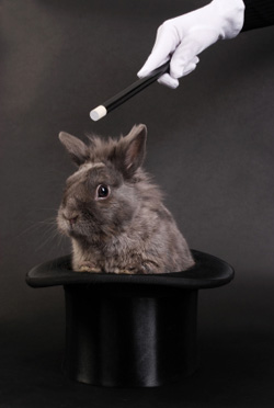 A rabbit in a hat