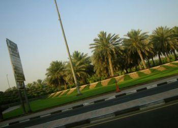 Green Grass In The Desert