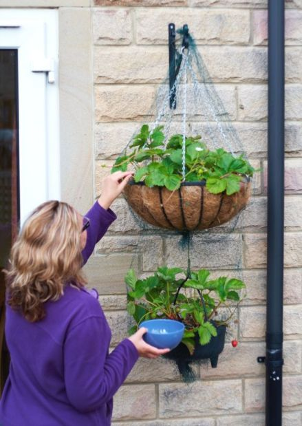 Hanging Strawberry Baskets