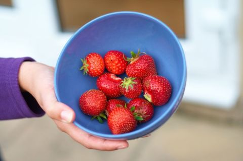 Freshly Picked Strawberries