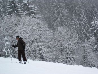 Skier Against The Trees