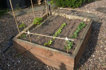 The Smaller Veg Plot