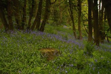 A Rock In A Sea Of Bluebells