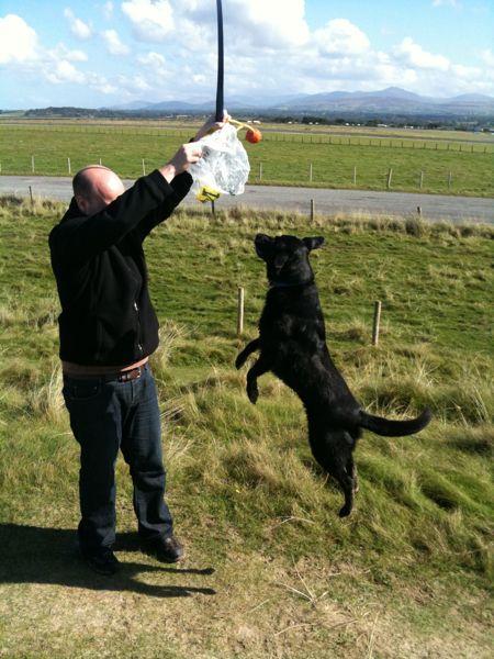 Non-Stupid Pet Tricks