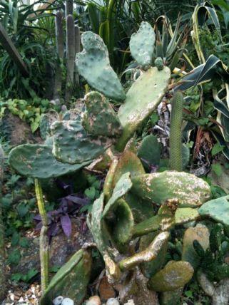A Cactus?!