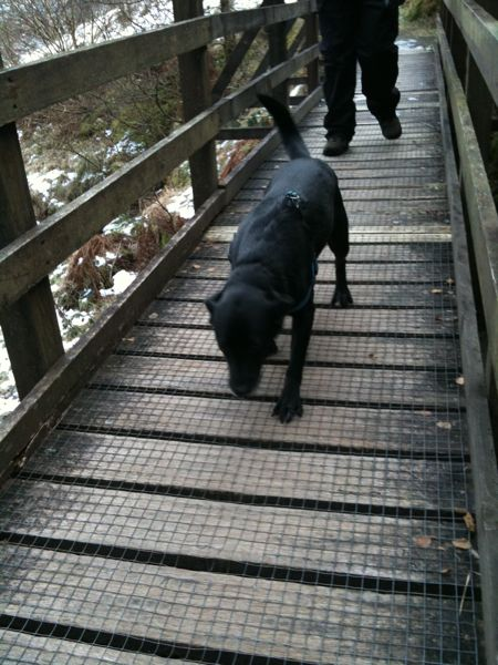 Penny Doesn't Like Bridges