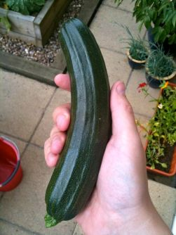 First Courgette Of The Year