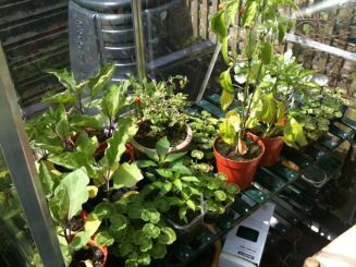 Greenhouse Shelf
