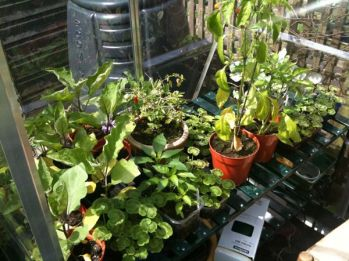 Greenhouse Shelf