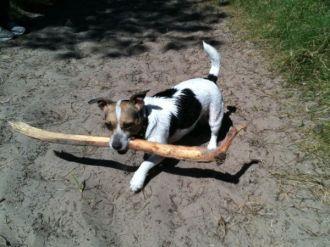 Fetch Maisie!