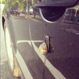 Snail Attack