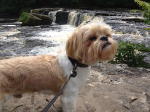 Billy Isn't Bothered By Waterfalls