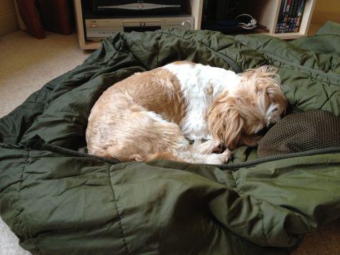 Billy Sleeping It Off
