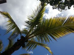 Palm trees disturbing my view