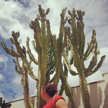 Look out for the cactus
