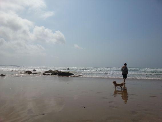 Nice Dog Walking Day