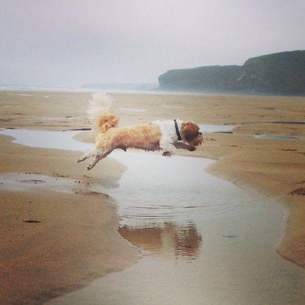 The Incredible Jumping Dog