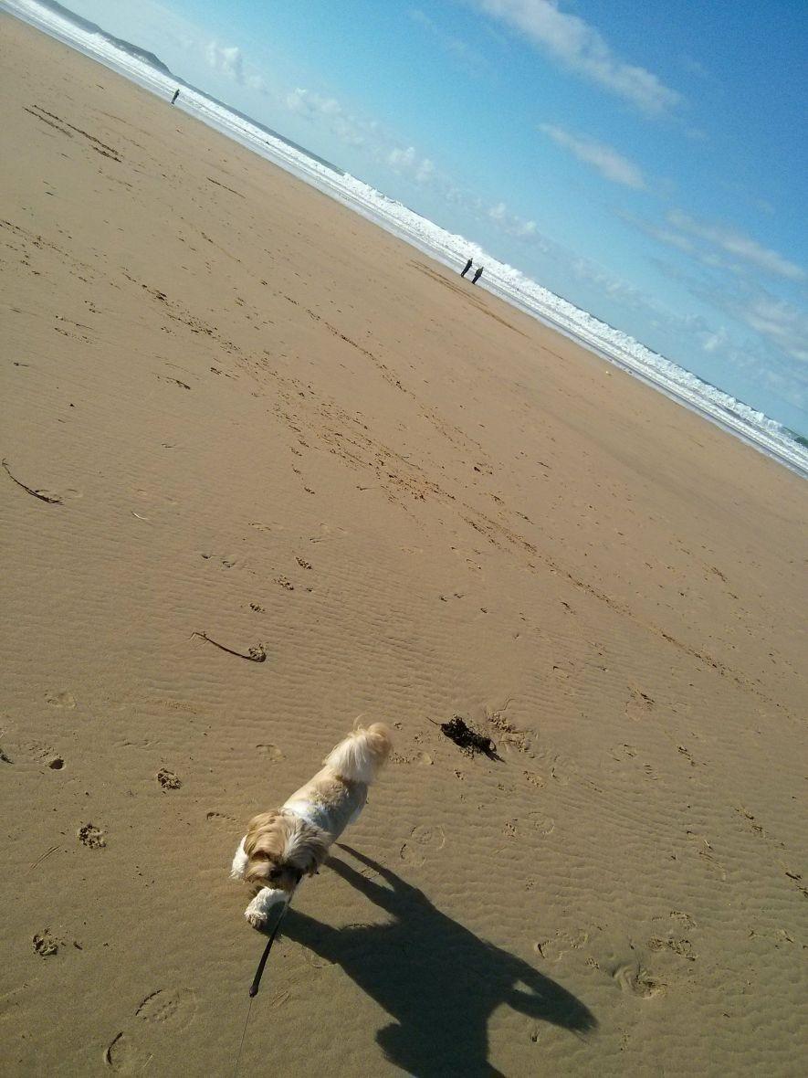 Dog = Run