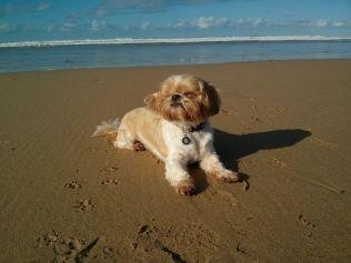 My Sun Bathing Dog