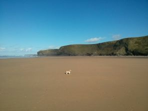 Big Beach, Small Dog