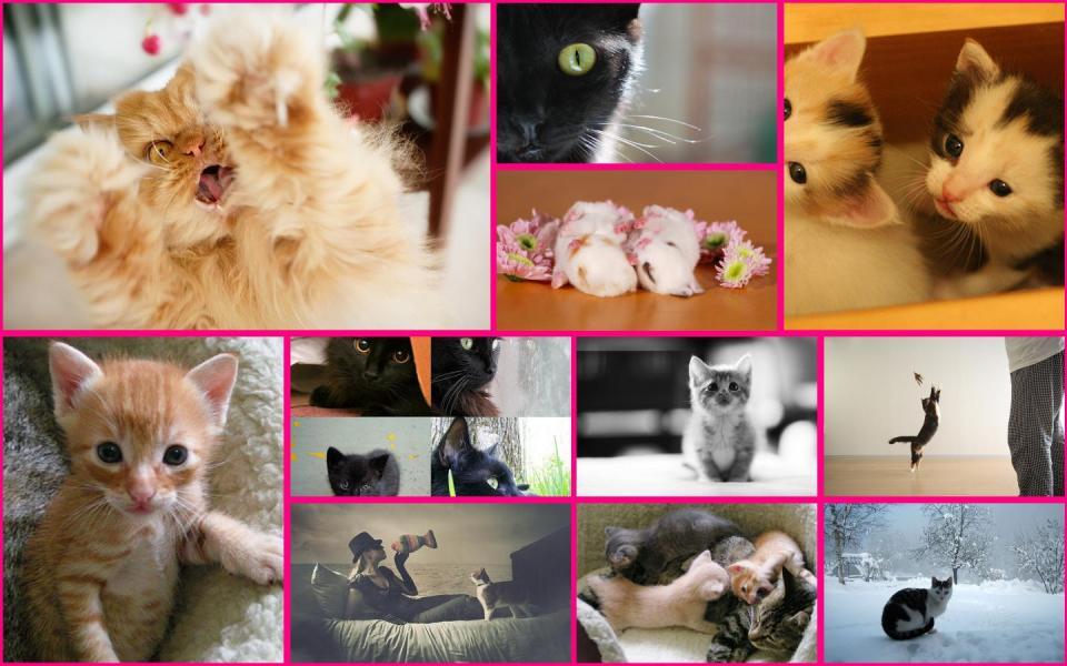 A Kitten Photo Collage