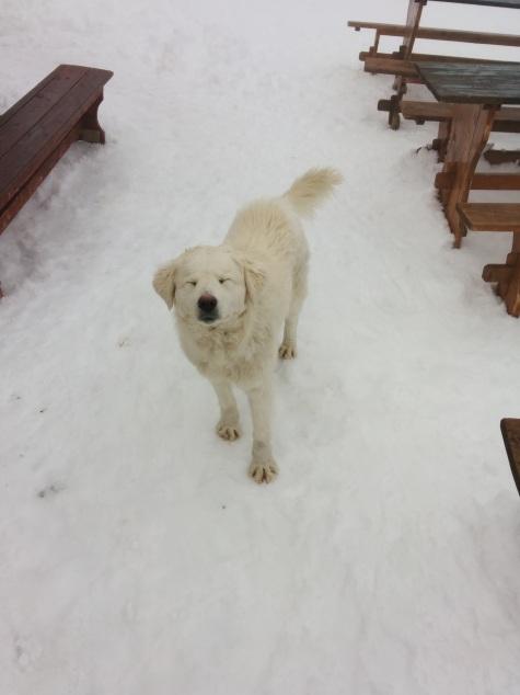 Snow Dog Number 1