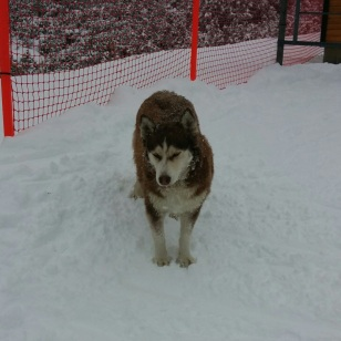 Crazy, Hardcore Snow Dog 2