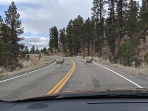 Lots of deer around to avoid!